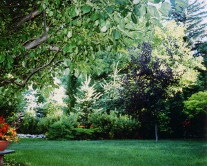 Our yard in the summer