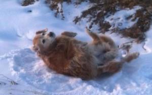 Maggie loves snow