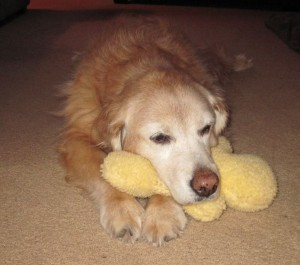 Our Maggie loves her toy